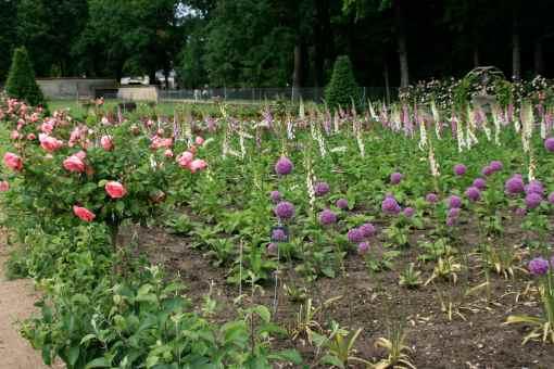 a cutting garden to rival Martha's!