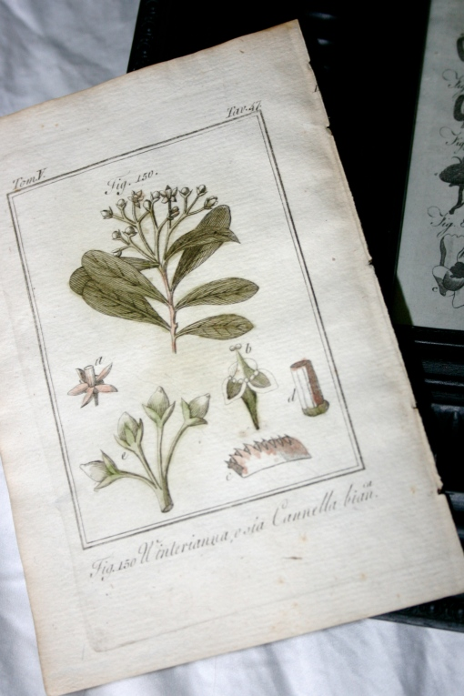 late 1700s hand-painted copperplate botanical