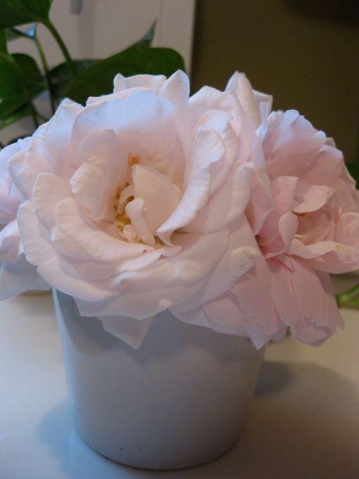 vase of new blooms